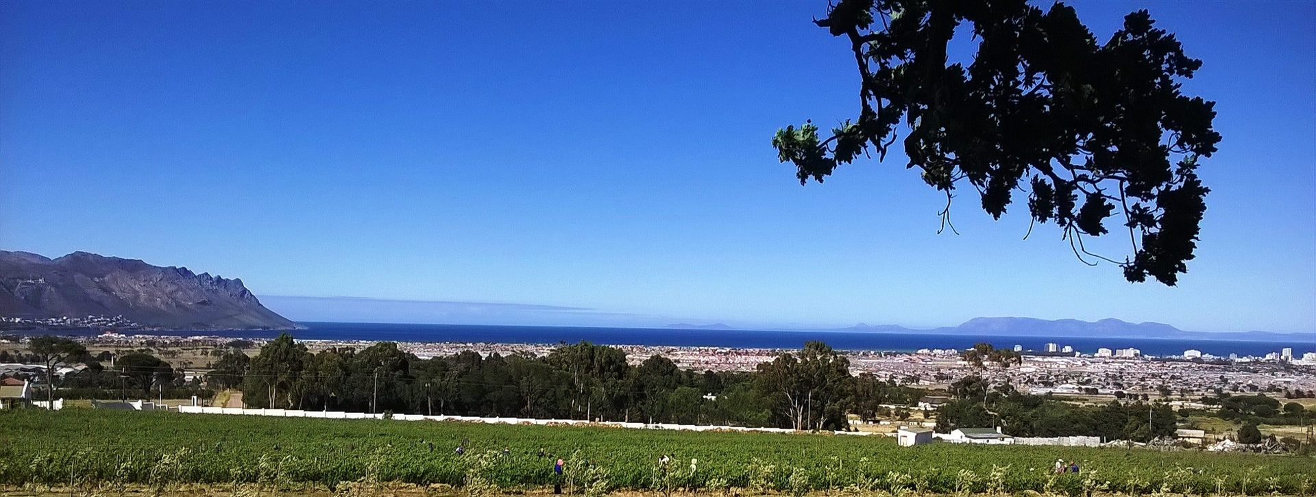 Capelands Wine Estate